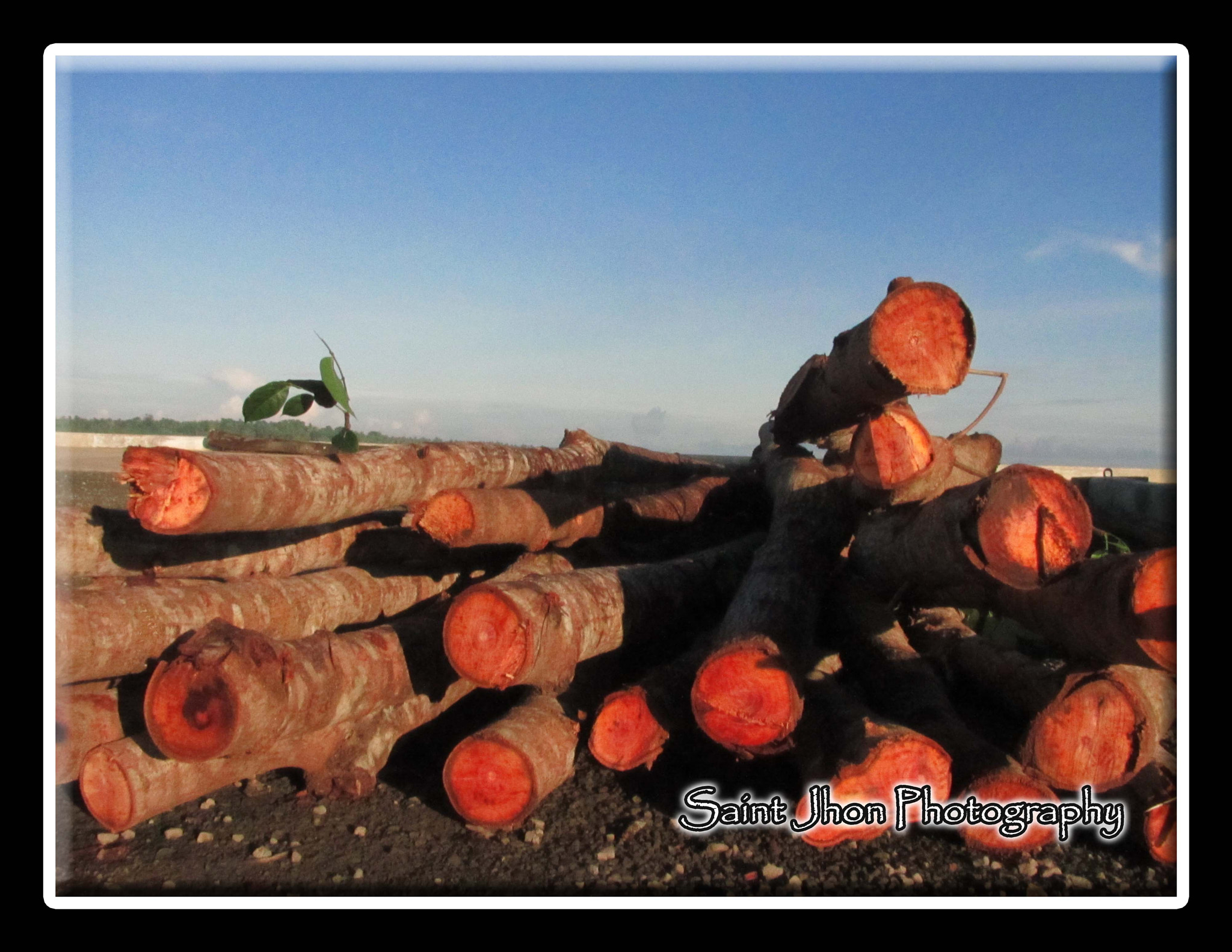 Photograph Cut trees by Jun Pedrabuena on 500px