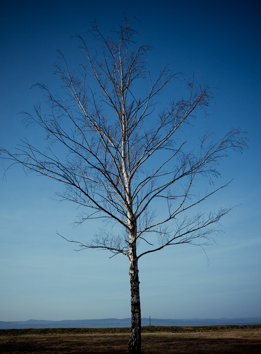 Photograph Lone Tree by Ryan Opaz on 500px