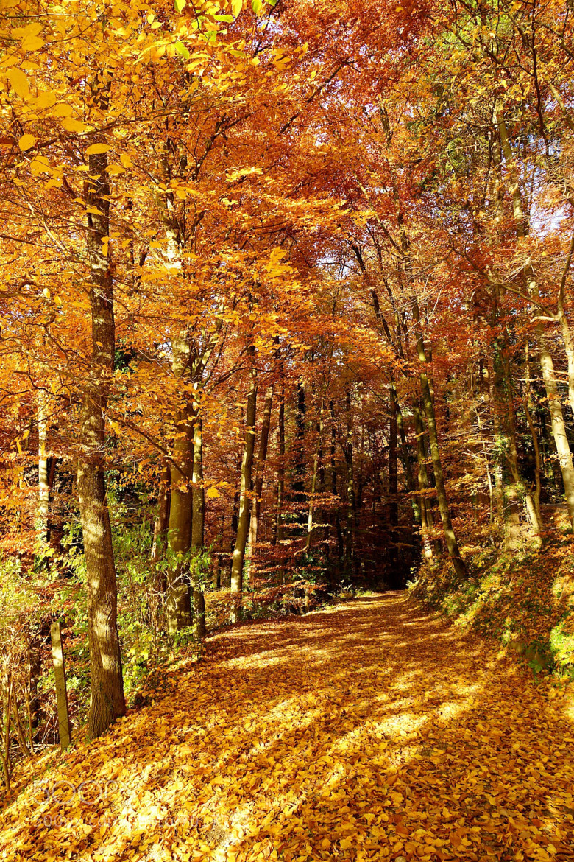 Photograph Swiss Autumn by Ben Hudson on 500px