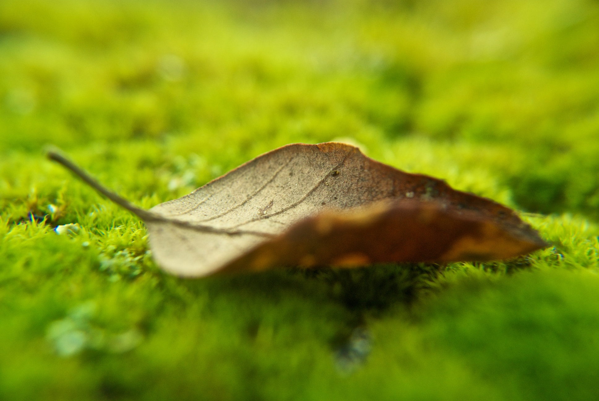 Photograph leaf by Pedro Cid on 500px