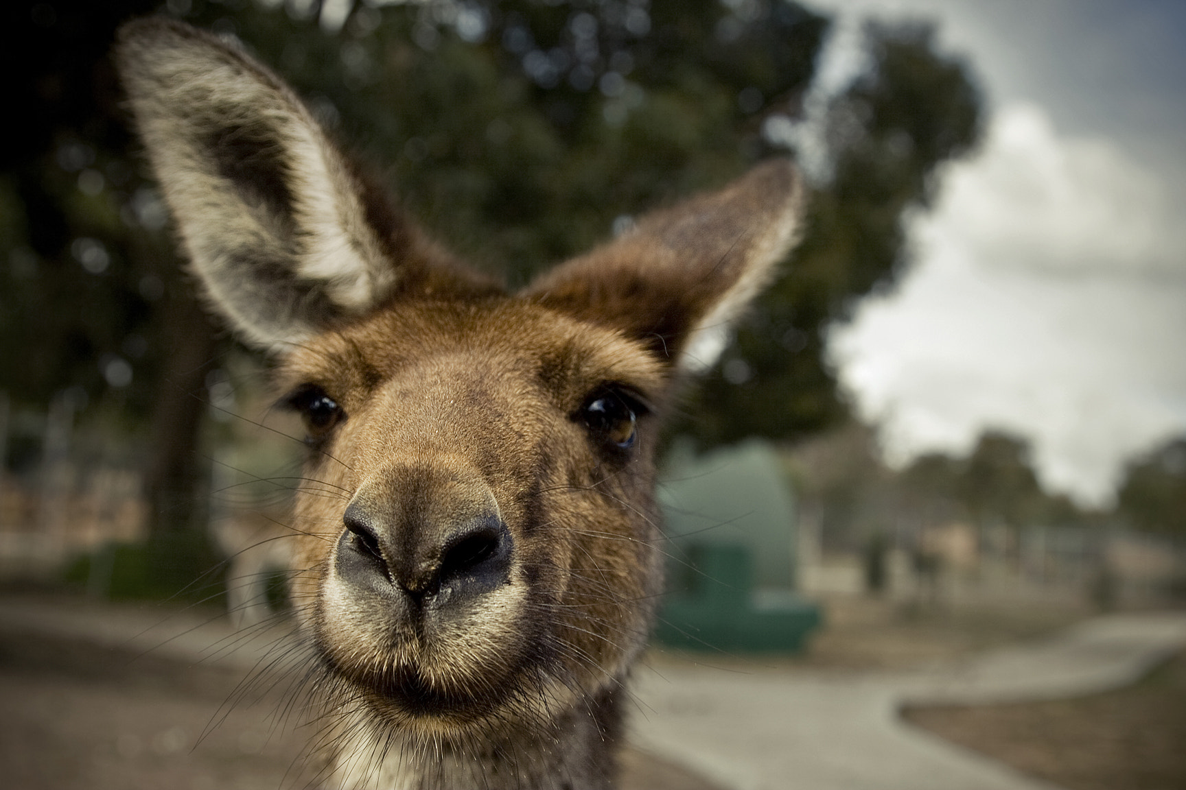 Photograph Roo the day by Ross Van der Watt on 500px