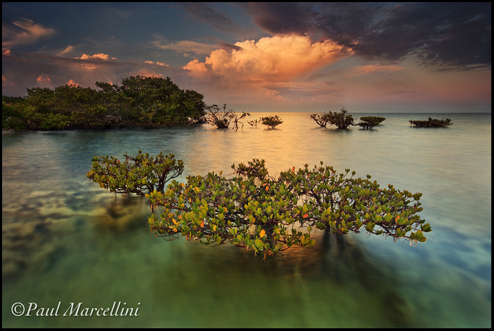 Photograph Mangrove Magic by Paul Marcellini on 500px