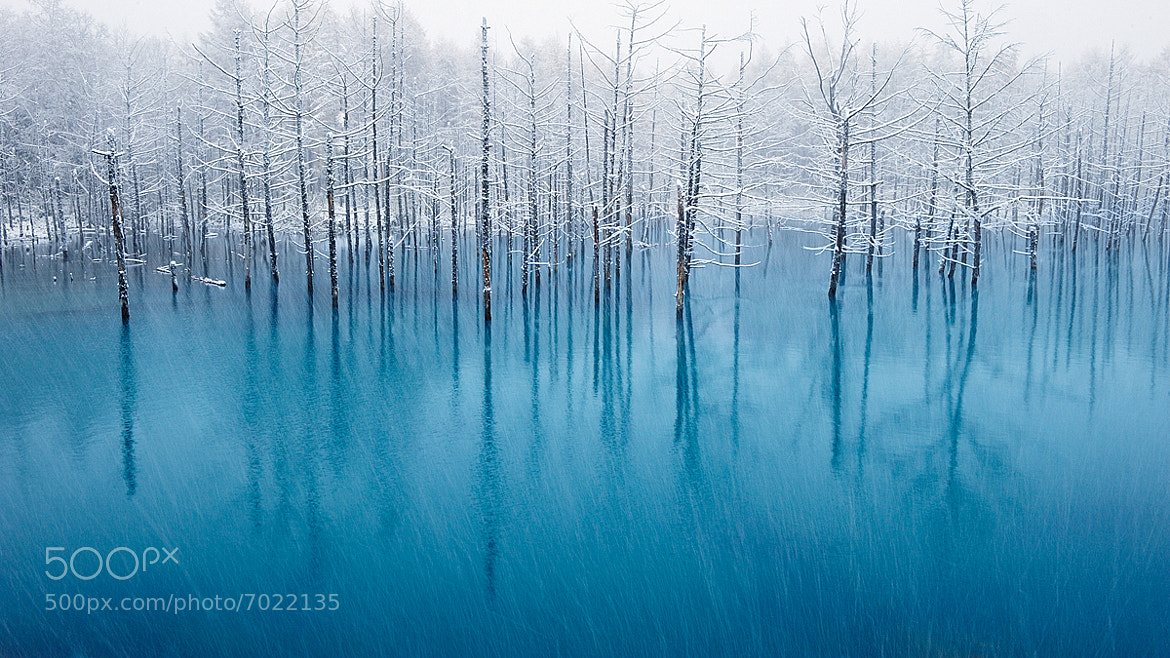 Photograph The Most Beautiful Pond In The World! by Kent Shiraishi on 500px