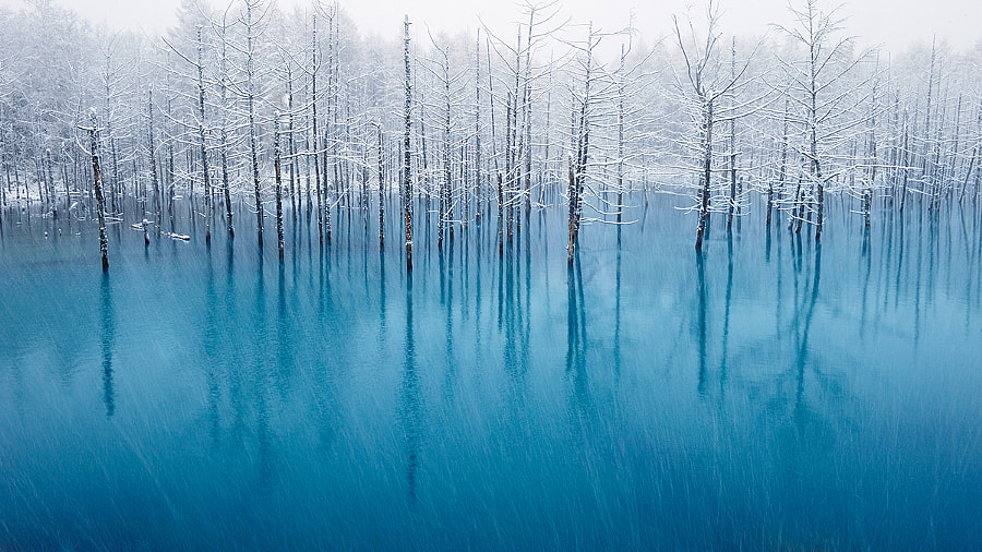 The Most Beautiful Pond In The World!, автор — Kent Shiraishi на 500px.com