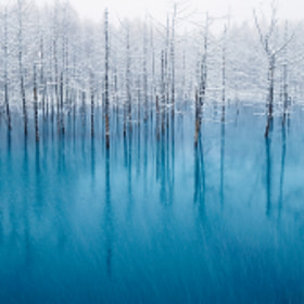 The Most Beautiful Pond In The World! by Kent Shiraishi (KentShiraishi)) on 500px.com