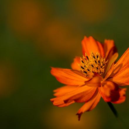 Fire of flower