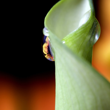 Close up lily water drop