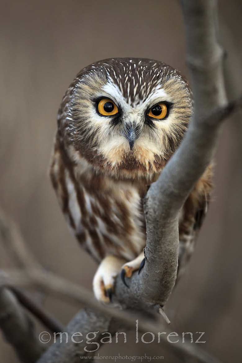 Photograph I Don't Give A Hoot by Megan Lorenz on 500px