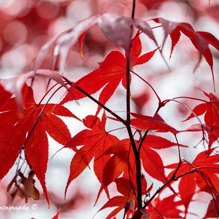 Mount Macedon in Autumn (Pic 10)