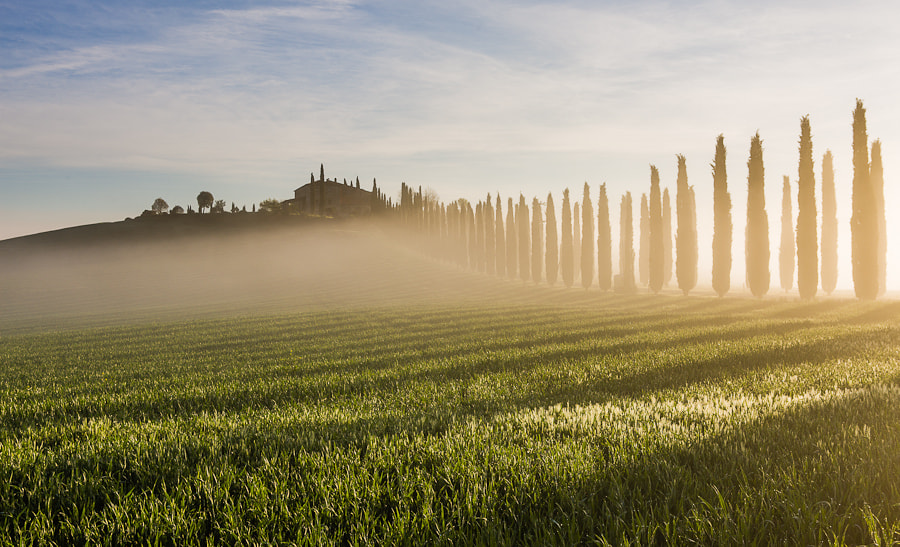 Photograph Tuscan Cypress Shadows by Hans Kruse on 500px