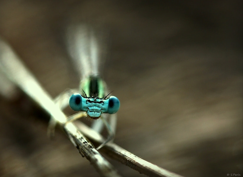 Photograph Blue eyes by Stephane PERIN on 500px