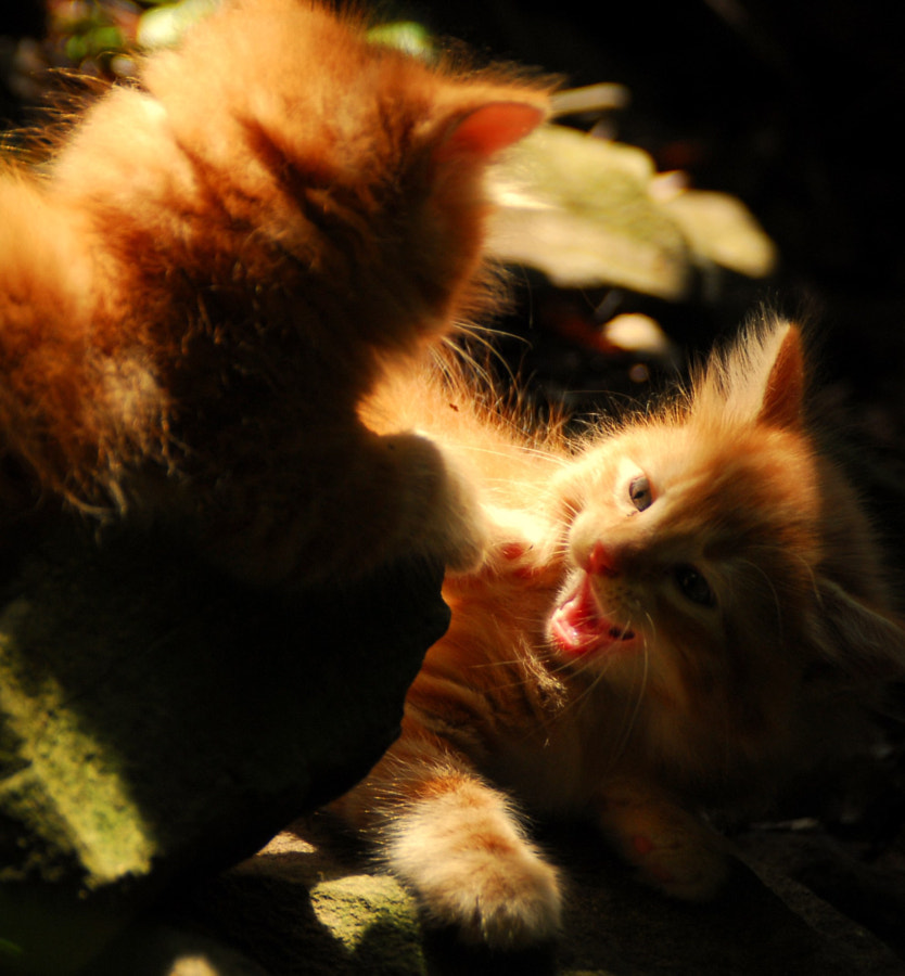 Orange Kittens in the Forest