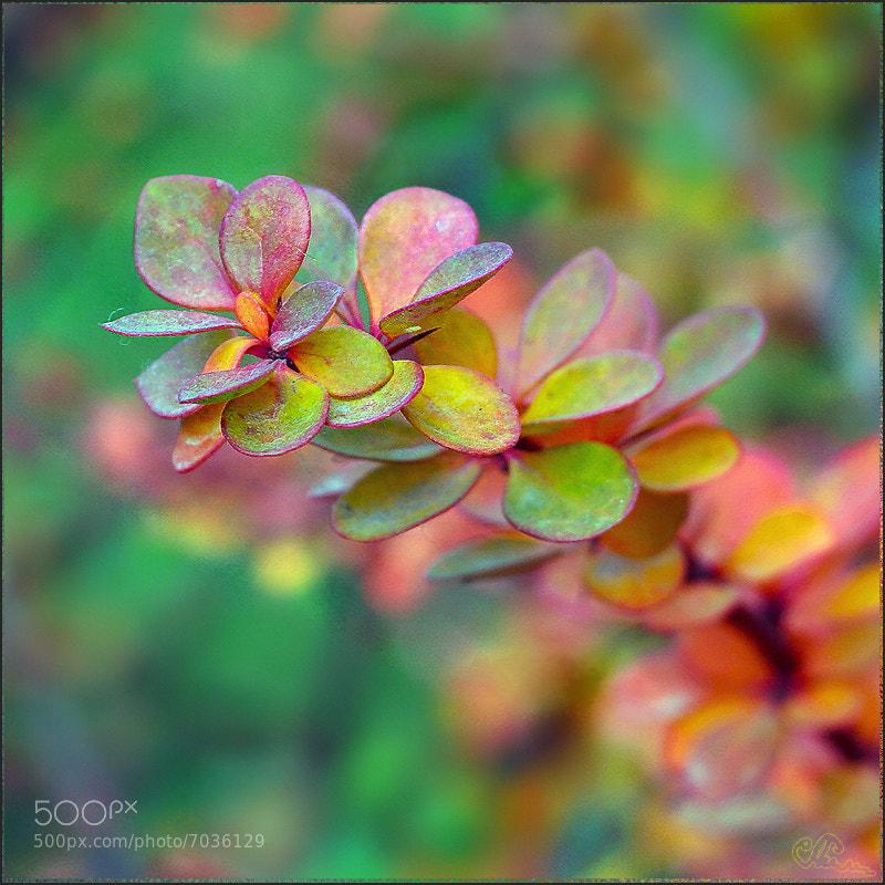 Autumn Palette by Alla Lora Simutina