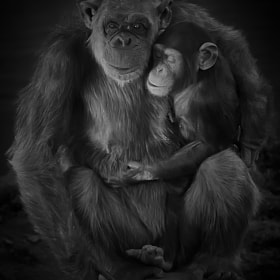 Happy Mother's Day!!!... New Version by Amador Esquiu (Amadoresquiu) on 500px.com