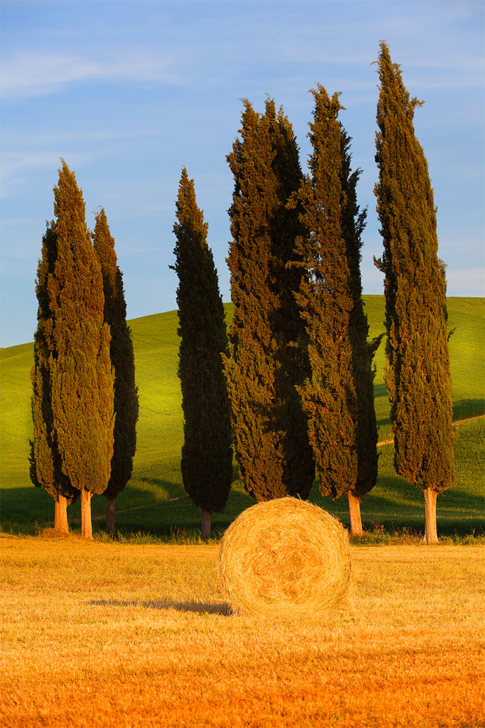 Photograph Giants and wheat by Marco Carmassi on 500px