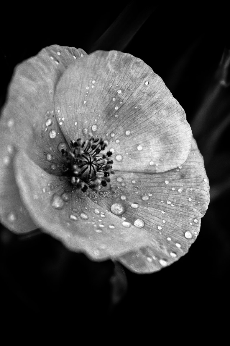 Photograph Drops by Sean Price on 500px