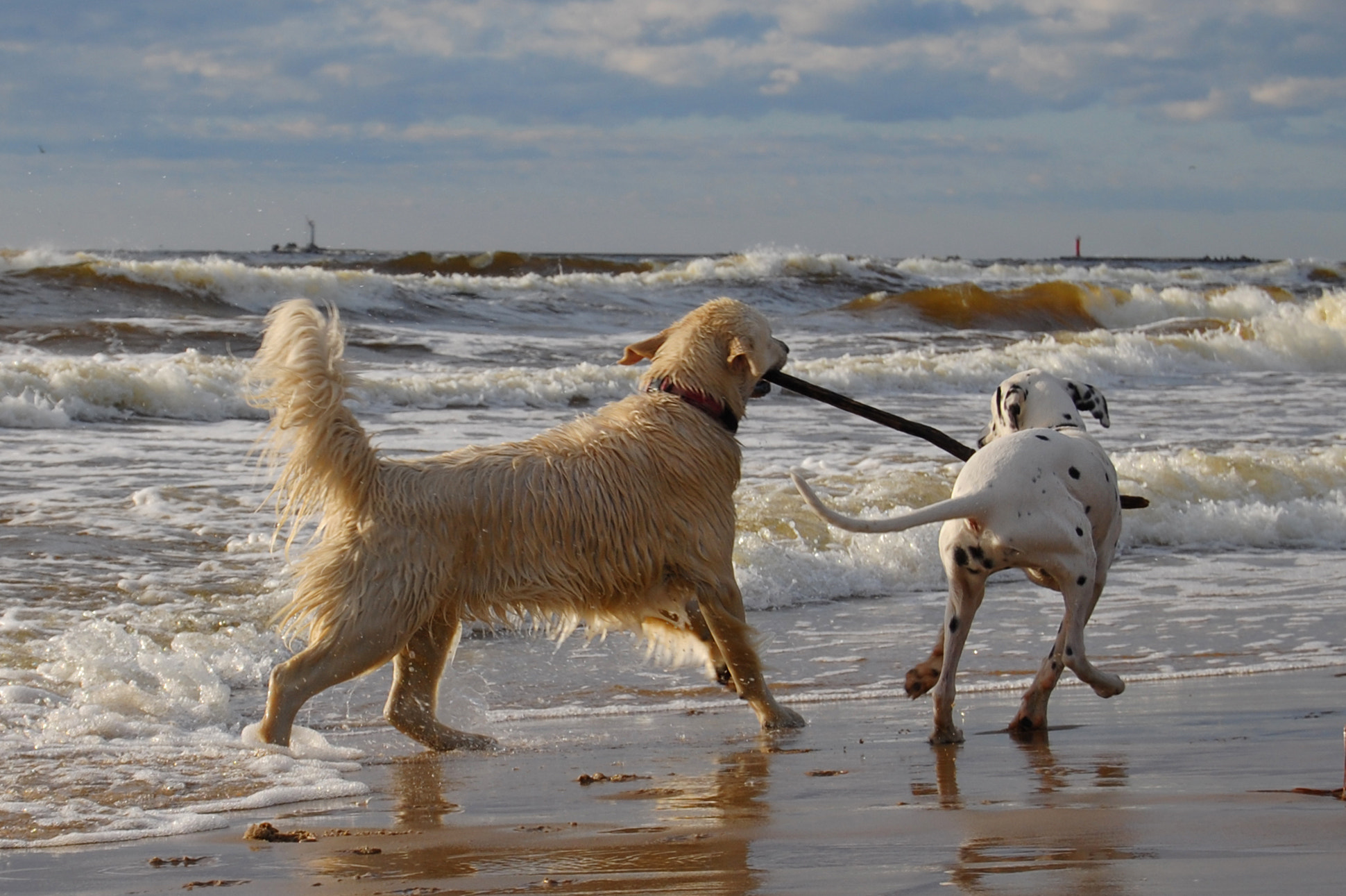 Photograph Dogs playing by Gynt S on 500px