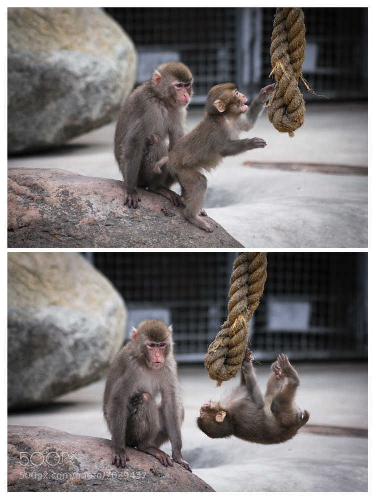 Photograph monkey's lesson by Dara Pilugina on 500px