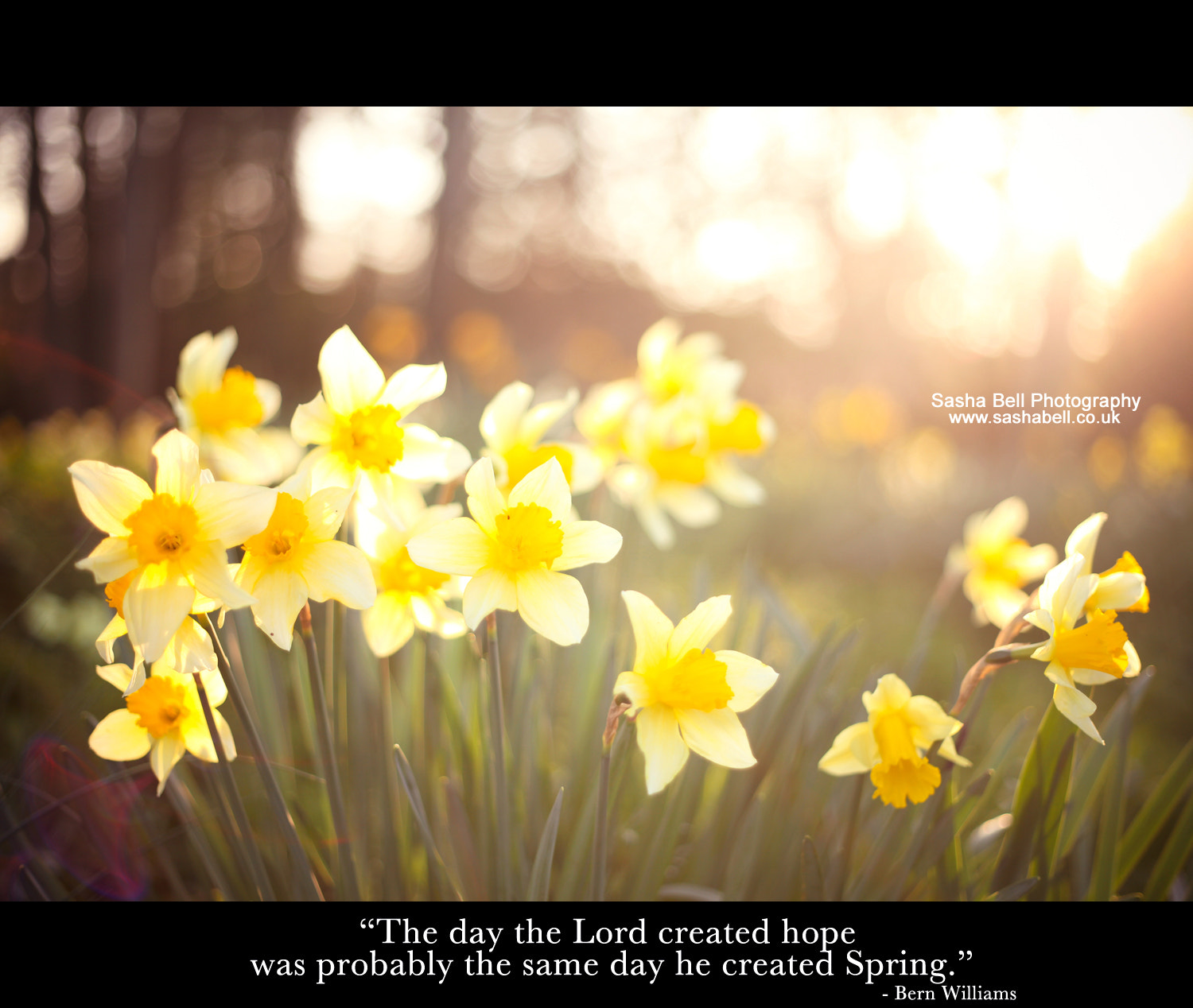 """Photograph """"The day the Lord created hope was probably the same day he created Spring"""" by Sasha L'Estrange-Bell on 500px"""
