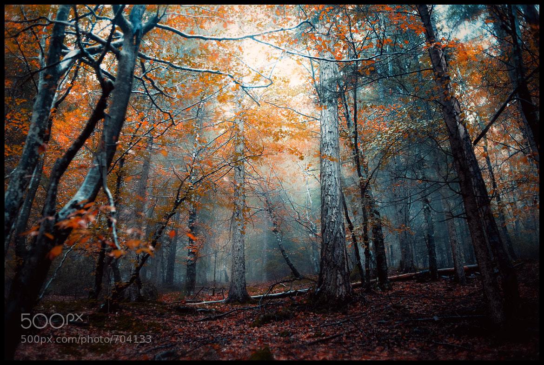 Photograph wood by Roberta Fuganti on 500px