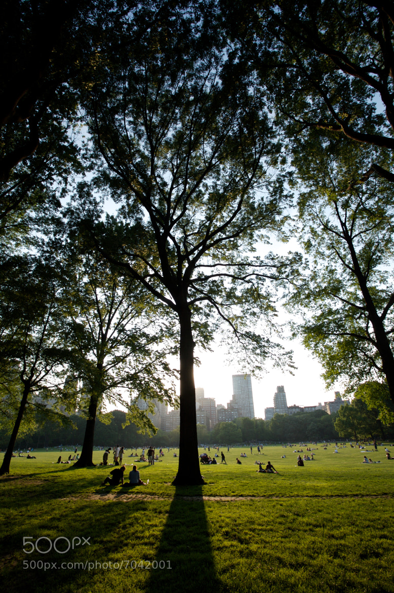 Photograph Great Lawn, Central Park, New York City by ldandersen on 500px