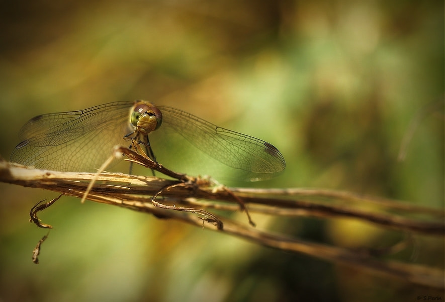 Photograph Four wings by Stephane PERIN on 500px