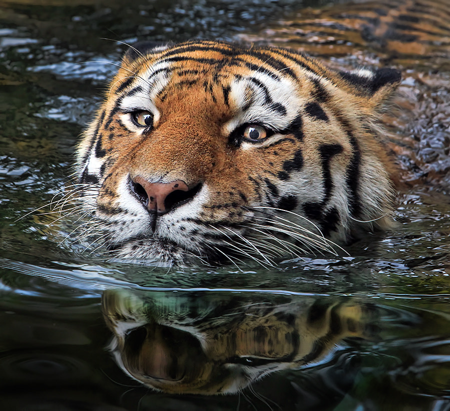 Photograph River crossing by Klaus Wiese on 500px