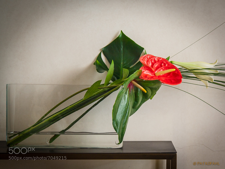 Photograph Still Life with Anthurium by Pat Kofahl on 500px