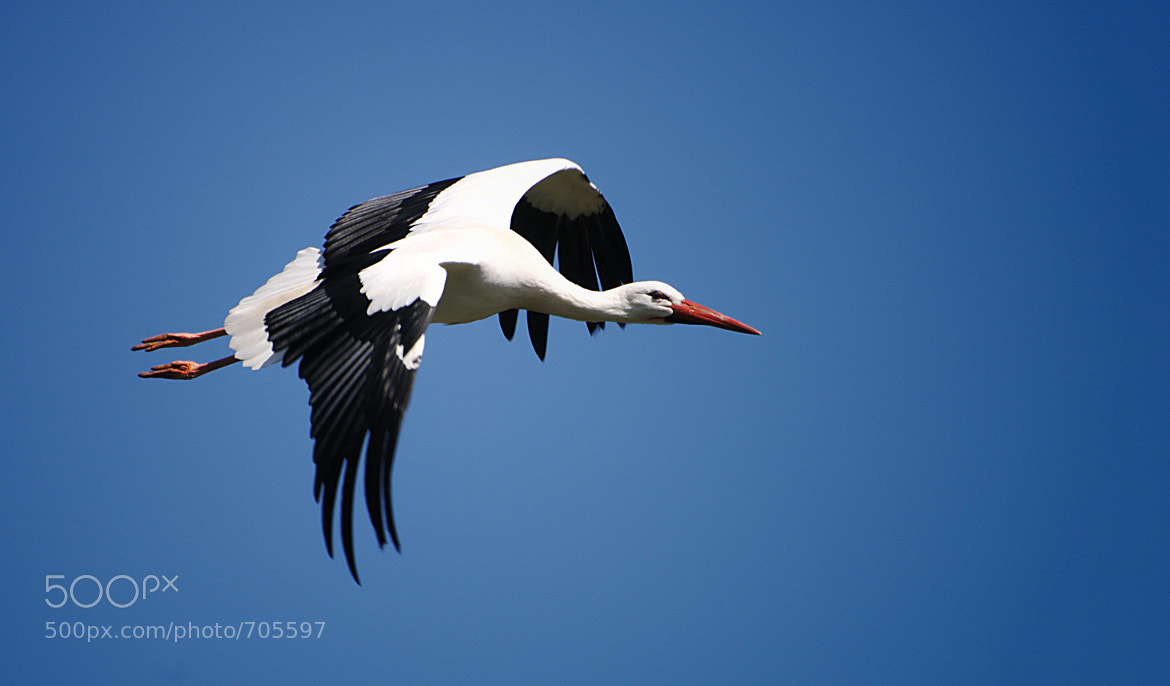 Photograph stork by Christopher Barclay on 500px