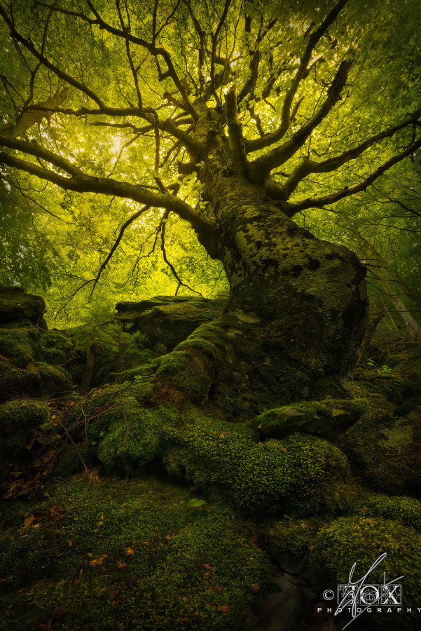 Photograph King of the Forest by Enrico Fossati on 500px