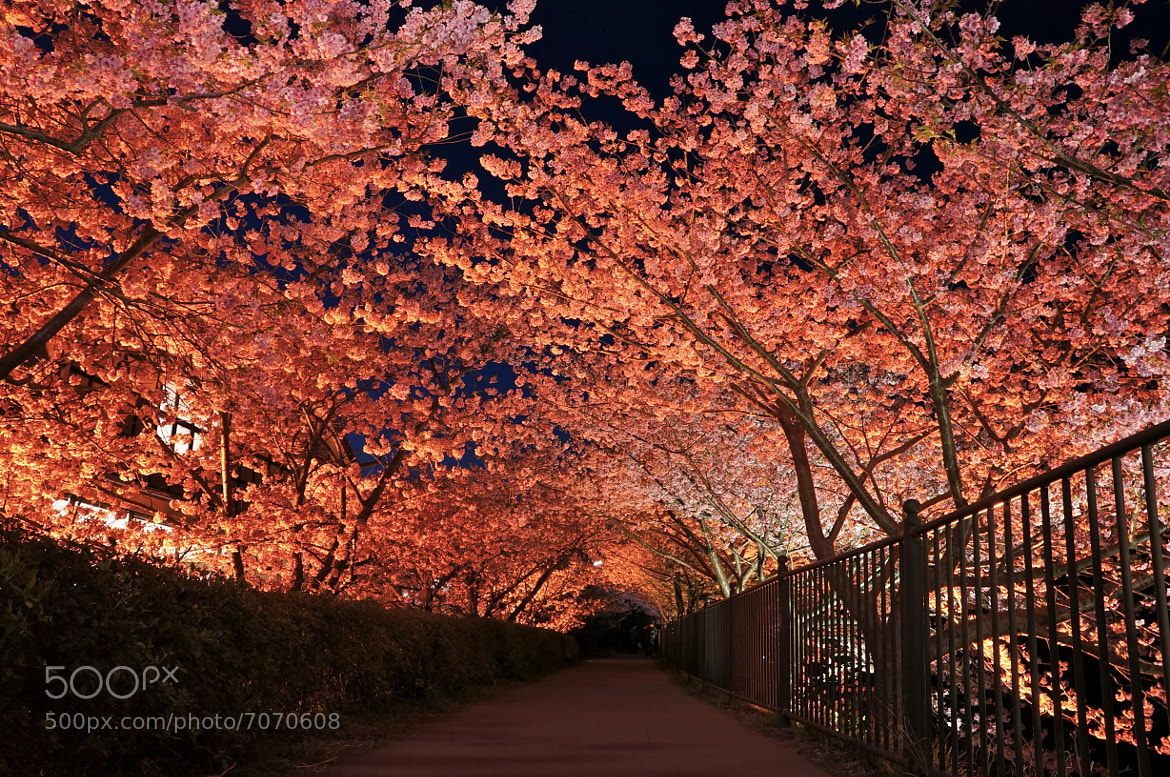 Photograph tunnel by shuso itaoka on 500px
