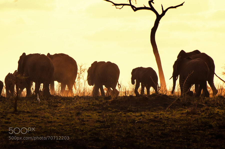 Photograph Elephants family in the dust by john wine on 500px