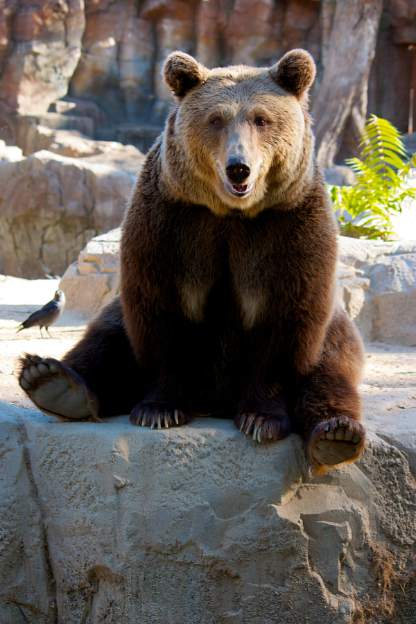 Photograph Smiling Grizzly by Lindsay Maiko Pflum on 500px