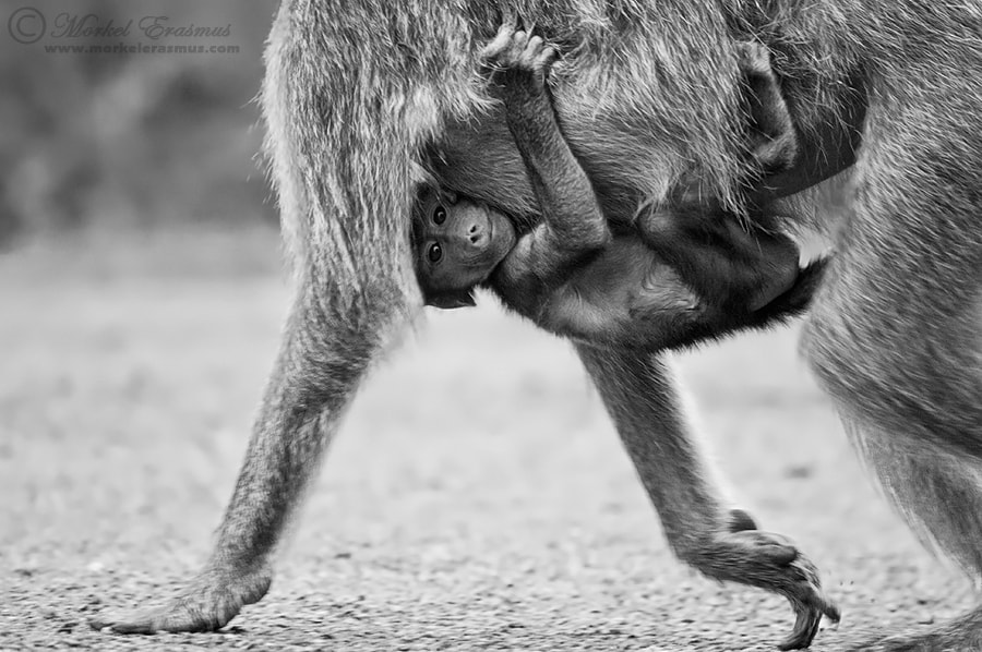 Photograph Holding On (aka Hungry Eyes) by Morkel Erasmus on 500px