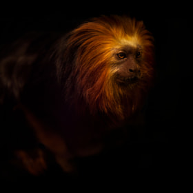 On fire by Sue Demetriou (MadMaxDog)) on 500px.com