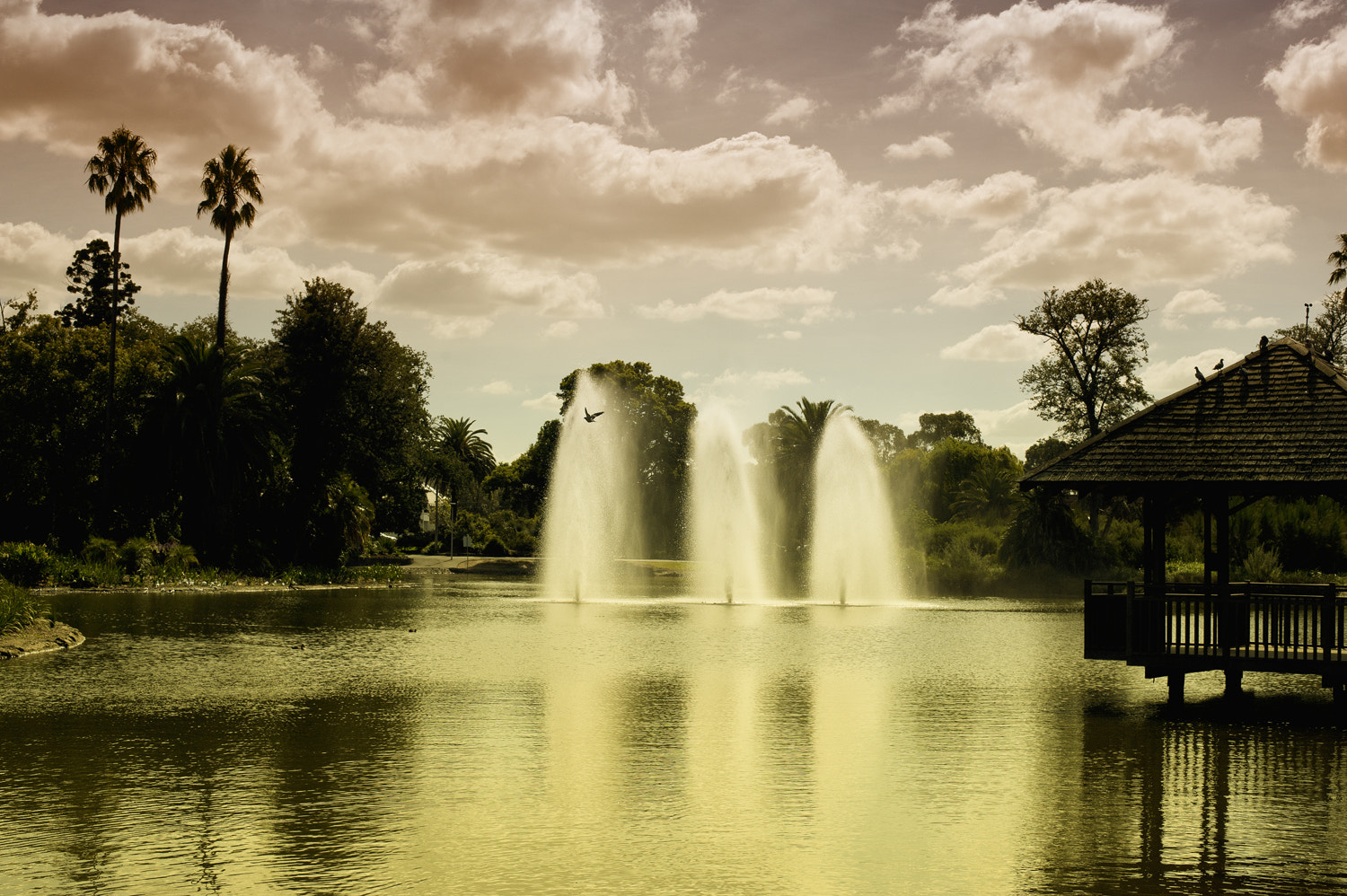 Photograph Queens Park, Melbourne by Mark  on 500px