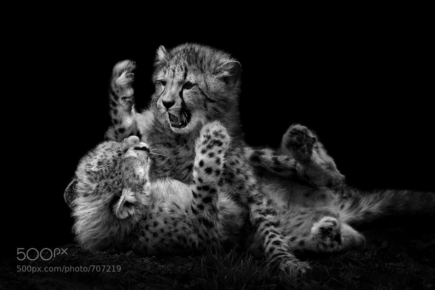Photograph LITTLE FIGHTERS by Wolf Ademeit on 500px