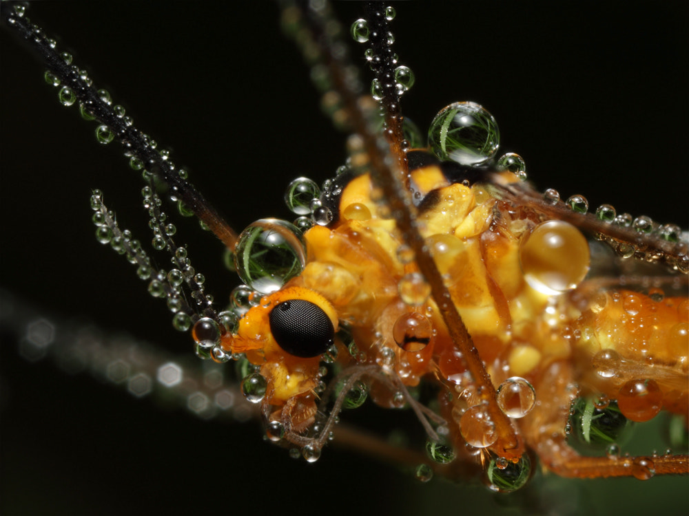 Photograph Jewels of dew by John Cogan on 500px