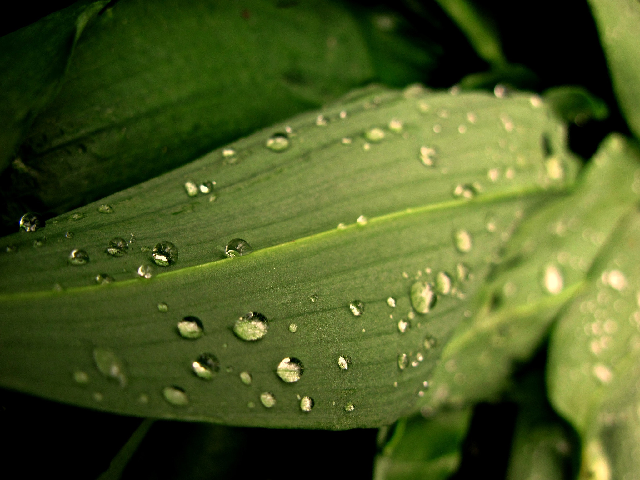 Photograph Drops by Natascha  Missel on 500px