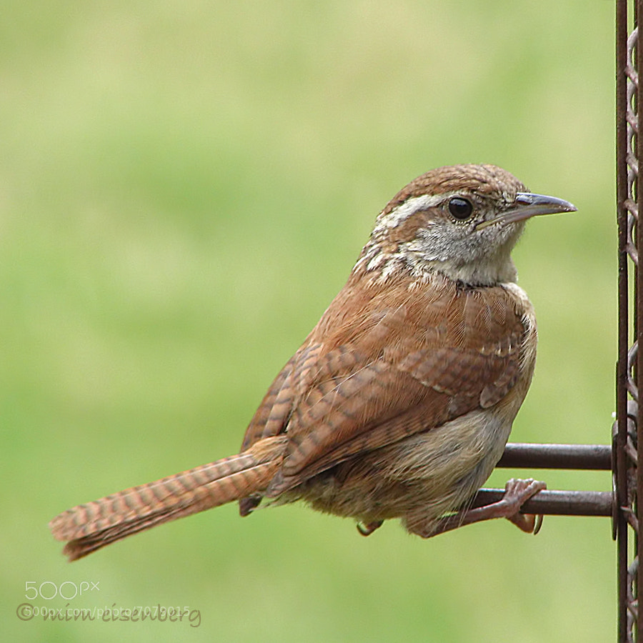 Photograph the fledgling at the feeder by Mim Eisenberg on 500px