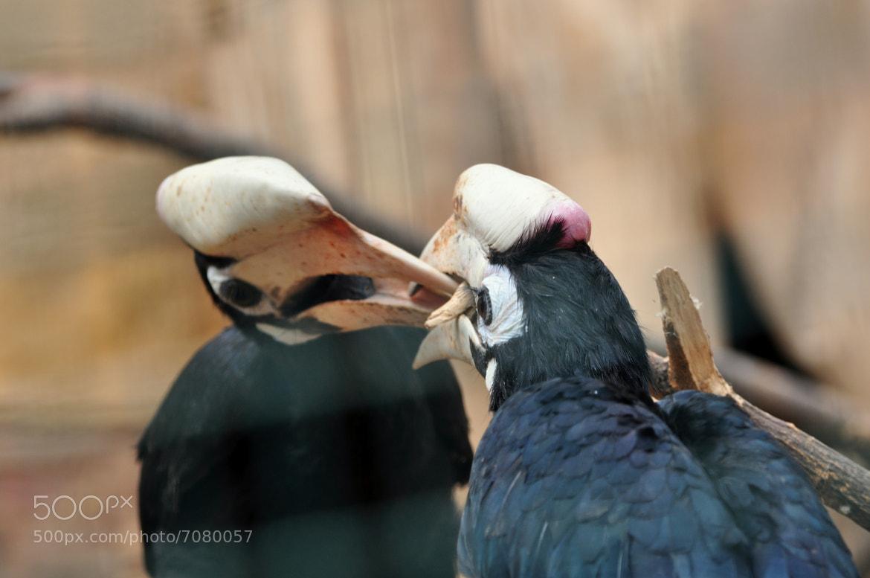 Photograph Birds fight by Athina Doka on 500px