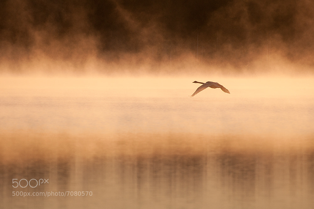 Photograph Through the mist by Mikko Lagerstedt on 500px