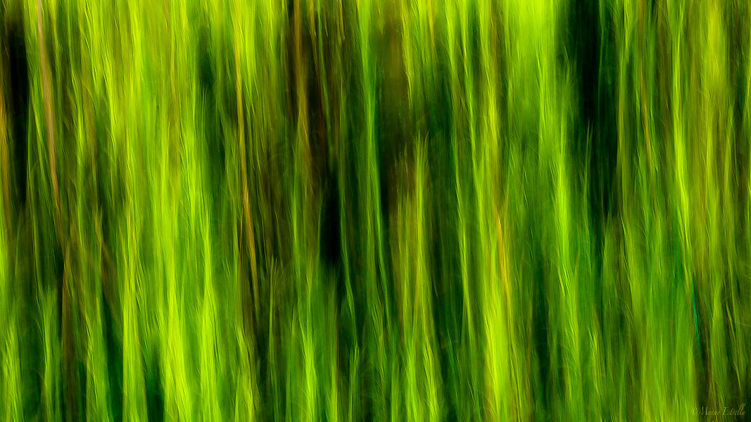Photograph Nature Abstract by Manny  Estrella on 500px