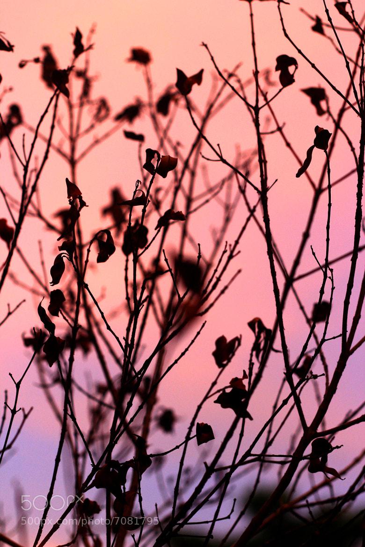 Photograph Orange purple by Bayu Adhi on 500px