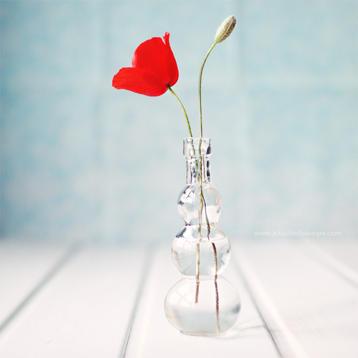 Photograph The poppy opens her scarlet purse of dreams. by Julia Dávila-Lampe on 500px