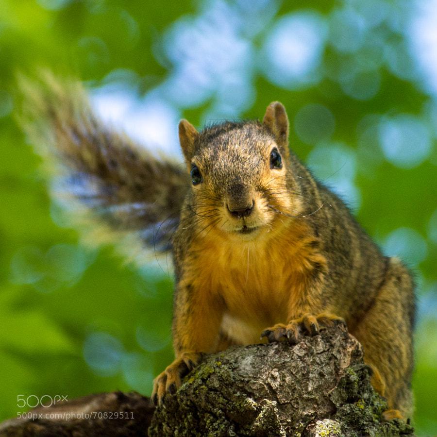 Squirrel Stare