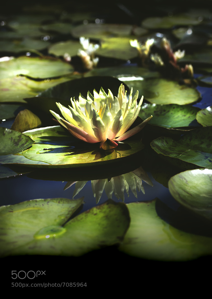 Photograph Lily pond by Jason Moskowitz on 500px