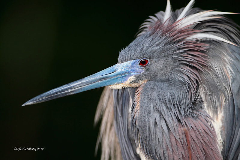 Photograph Bashful by Charlie Wesley on 500px