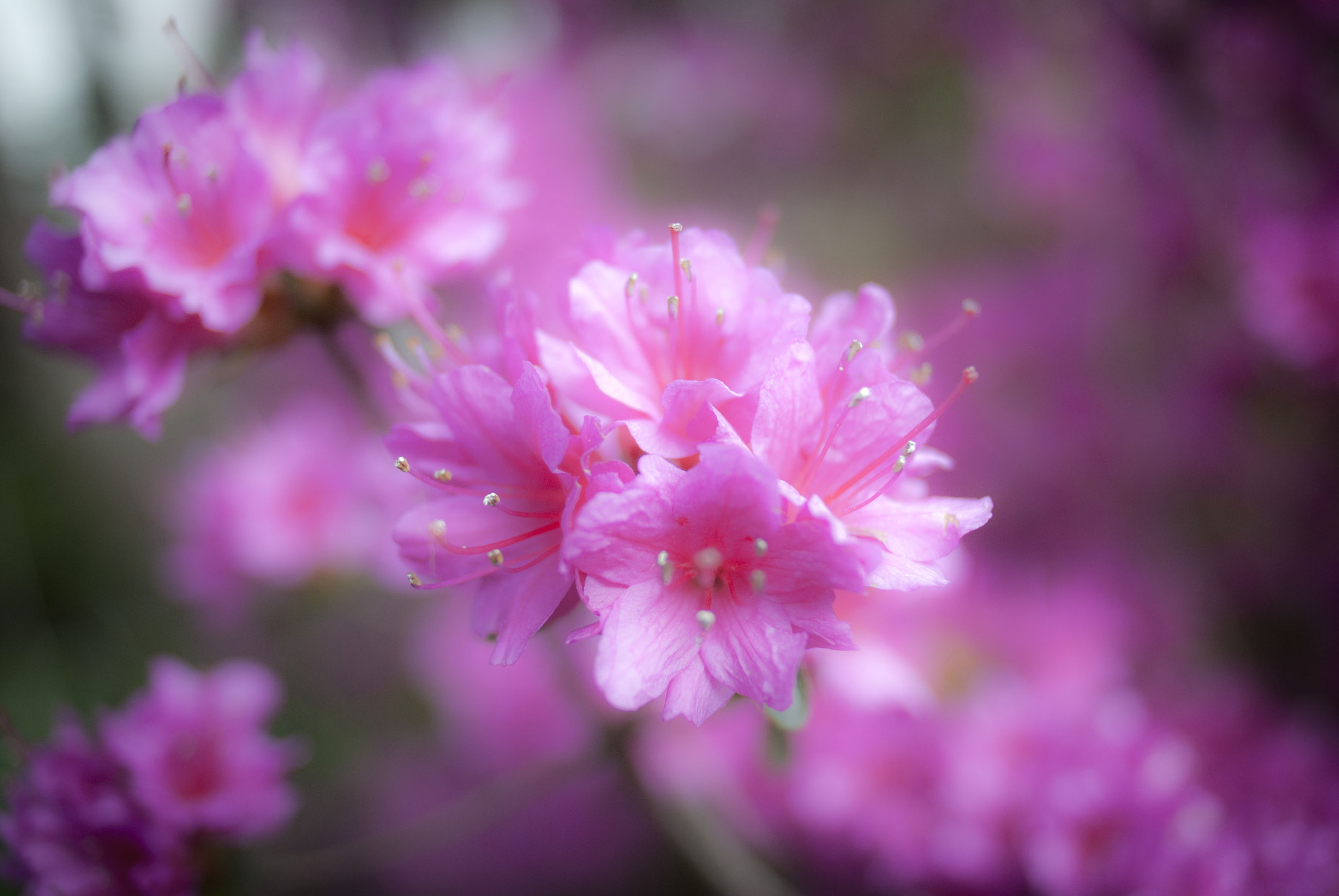 Photograph Pretty in Pink by Peter Baptiste on 500px