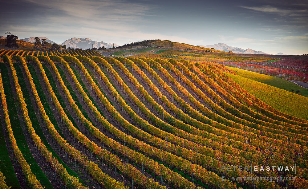 Photograph Blenheim Vineyard by Peter Eastway on 500px